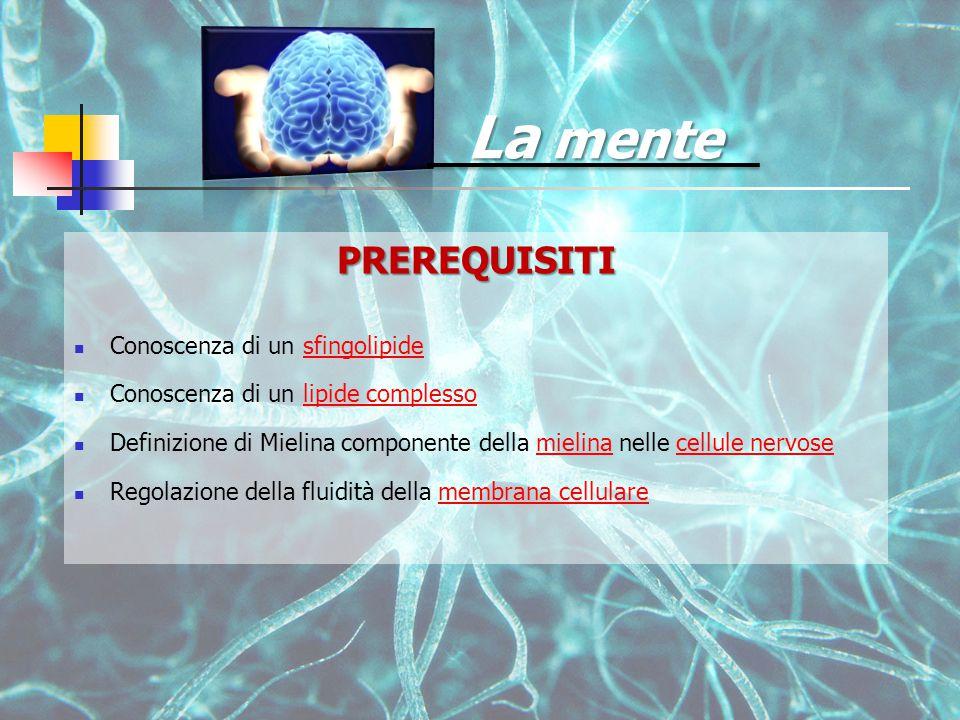 La mente PREREQUISITI Conoscenza di un sfingolipidesfingolipide Conoscenza di un lipide complessolipide complesso Definizione di Mielina componente della mielina nelle cellule nervosemielinacellule nervose Regolazione della fluidità della membrana cellularemembrana cellulare