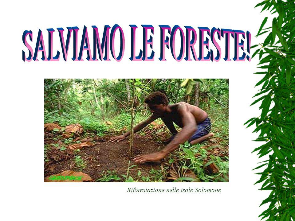 Riforestazione nelle isole Solomone