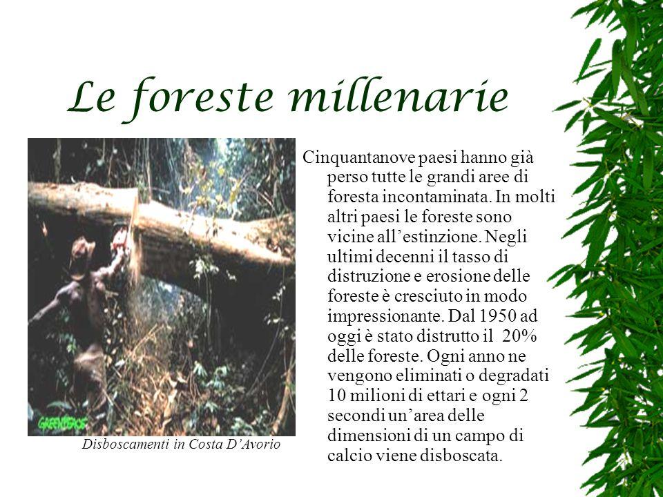 Le foreste millenarie Cinquantanove paesi hanno già perso tutte le grandi aree di foresta incontaminata.