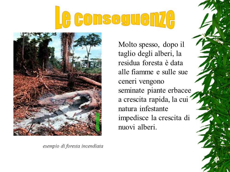 Molte specie di piante e animali che le abitano rischiano l'estinzione.