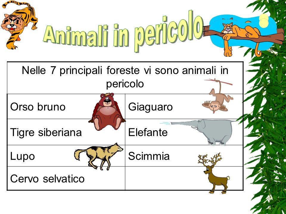 Nelle 7 principali foreste vi sono animali in pericolo Orso brunoGiaguaro Tigre siberianaElefante LupoScimmia Cervo selvatico