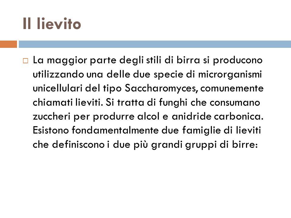 Il lievito  La maggior parte degli stili di birra si producono utilizzando una delle due specie di microrganismi unicellulari del tipo Saccharomyces,