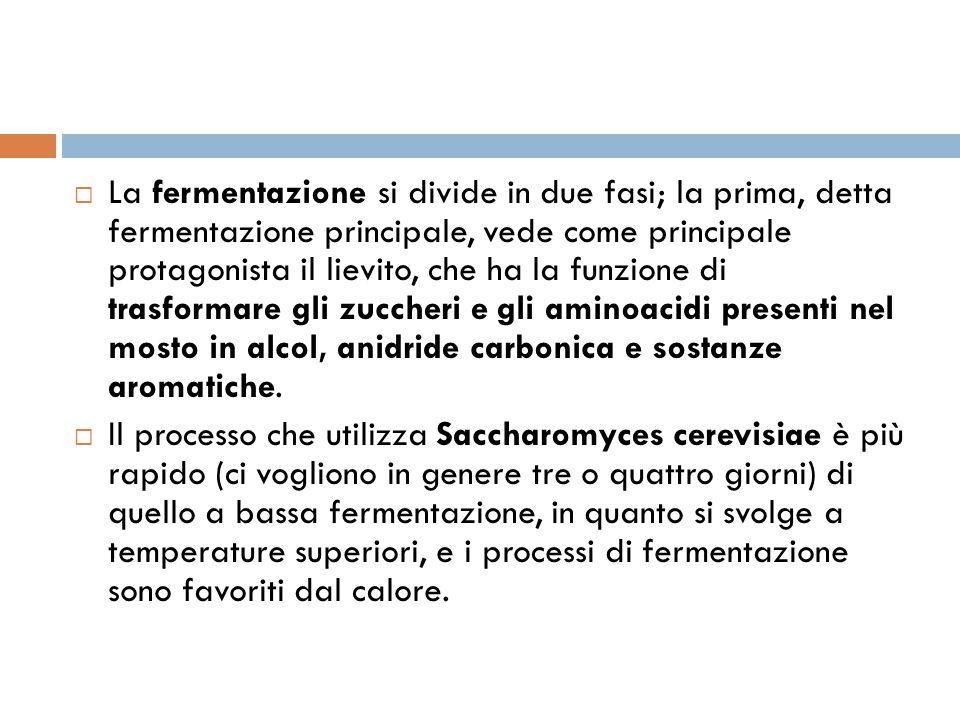  La fermentazione si divide in due fasi; la prima, detta fermentazione principale, vede come principale protagonista il lievito, che ha la funzione d