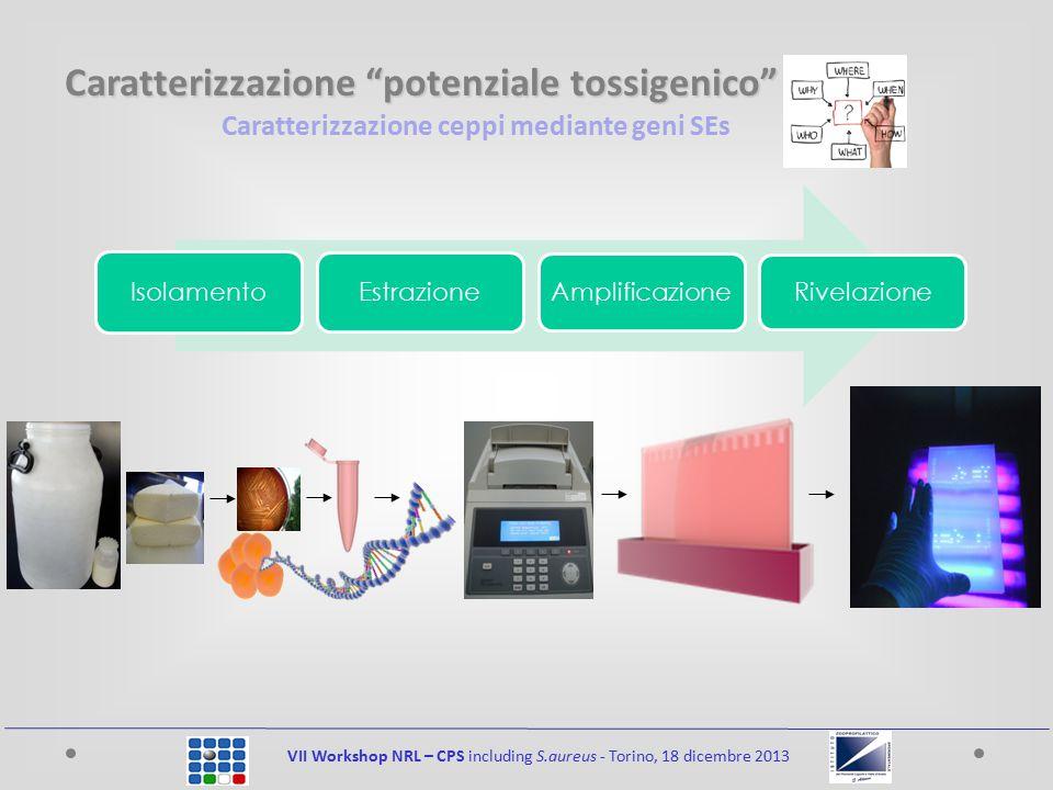 Caratterizzazione ceppi mediante geni SEs VII Workshop NRL – CPS including S.aureus - Torino, 18 dicembre 2013 Isolamento Estrazione Amplificazione Ri