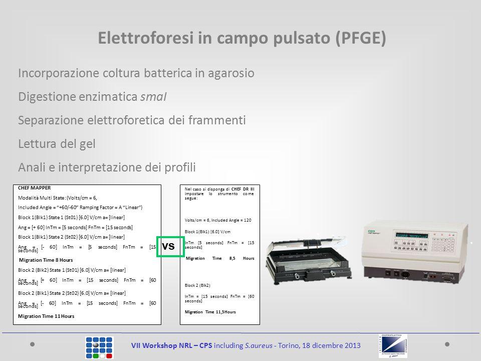 VII Workshop NRL – CPS including S.aureus - Torino, 18 dicembre 2013 Elettroforesi in campo pulsato (PFGE) Incorporazione coltura batterica in agarosio Digestione enzimatica smaI Separazione elettroforetica dei frammenti Lettura del gel Anali e interpretazione dei profili CHEF MAPPER Modalità Multi State: (Volts/cm = 6, Included Angle = +60/-60 Ramping Factor = A Linear ) Block 1(Blk1) State 1 (St01) [6.0] V/cm a= [linear] Ang = [+ 60] InTm = [5 seconds] FnTm = [15 seconds] Block 1(Blk1) State 2 (St02) [6.0] V/cm a= [linear] Ang = [- 60] InTm = [5 seconds] FnTm = [15 seconds] Migration Time 8 Hours Block 2 (Blk2) State 1 (St01) [6.0] V/cm a= [linear] Ang = [+ 60] InTm = [15 seconds] FnTm = [60 seconds] Block 2 (Blk1) State 2 (St02) [6.0] V/cm a= [linear] Ang = [- 60] InTm = [15 seconds] FnTm = [60 seconds] Migration Time 11 Hours Nel caso si disponga di CHEF DR III impostare lo strumento come segue: Volts/cm = 6, Included Angle = 120 Block 1(Blk1) [6.0] V/cm InTm [5 seconds] FnTm = [15 seconds] Migration Time 8,5 Hours Block 2 (Blk2) InTm = [15 seconds] FnTm = [60 seconds] Migration Time 11,5Hours vs
