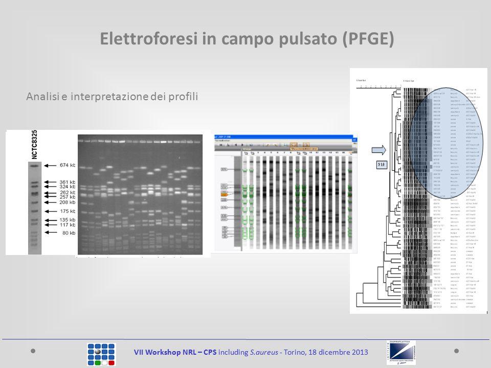 VII Workshop NRL – CPS including S.aureus - Torino, 18 dicembre 2013 Elettroforesi in campo pulsato (PFGE) Analisi e interpretazione dei profili