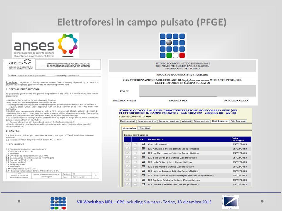 VII Workshop NRL – CPS including S.aureus - Torino, 18 dicembre 2013 Elettroforesi in campo pulsato (PFGE)