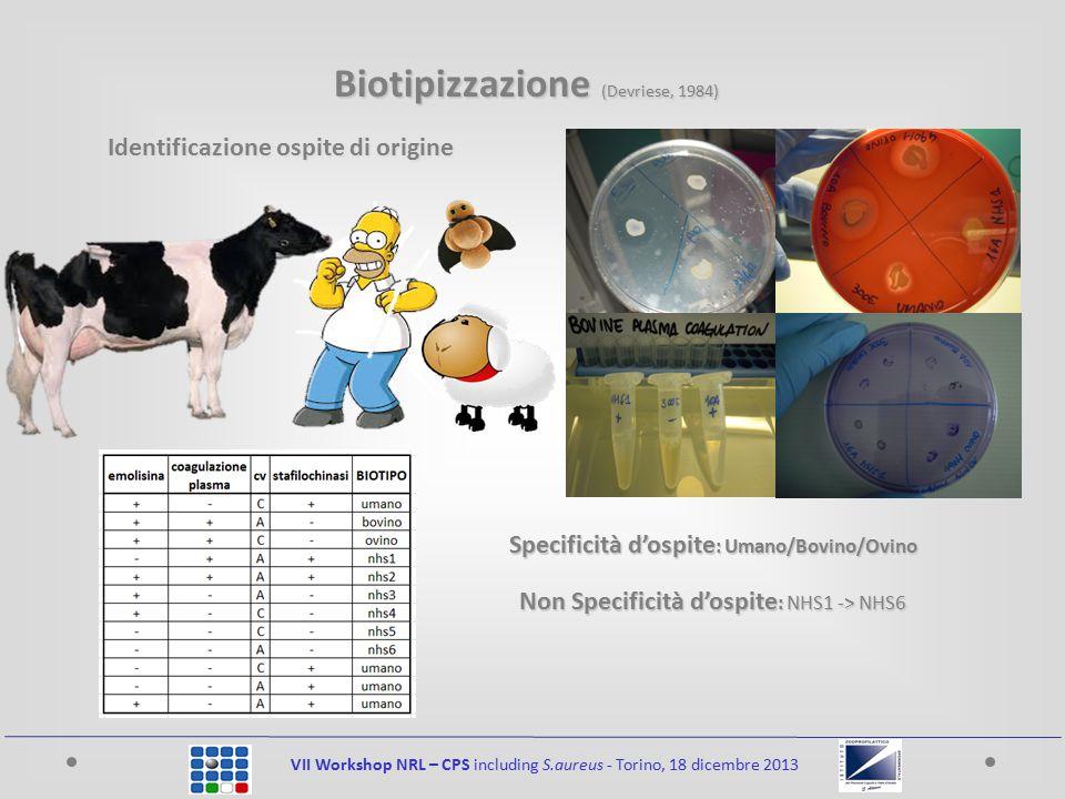 VII Workshop NRL – CPS including S.aureus - Torino, 18 dicembre 2013 Identificazione ospite di origine Specificità d'ospite : Umano/Bovino/Ovino Non Specificità d'ospite : NHS1 -> NHS6 Biotipizzazione (Devriese, 1984)
