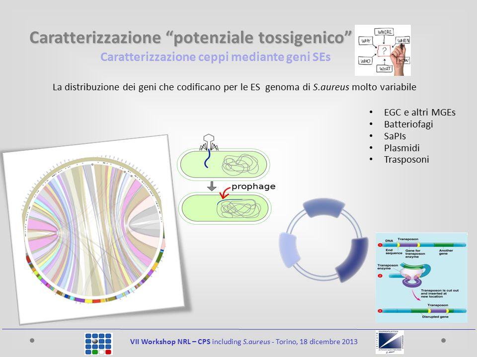 Caratterizzazione ceppi mediante geni SEs VII Workshop NRL – CPS including S.aureus - Torino, 18 dicembre 2013 La distribuzione dei geni che codifican