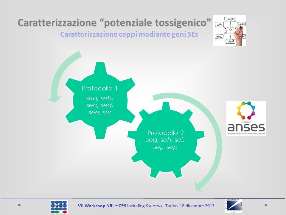 Caratterizzazione ceppi mediante geni SEs VII Workshop NRL – CPS including S.aureus - Torino, 18 dicembre 2013 Isolamento Estrazione Amplificazione Rivelazione Caratterizzazione potenziale tossigenico