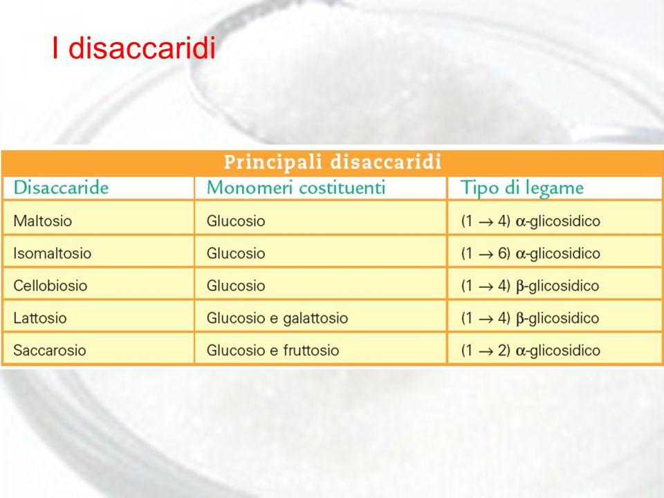  Saccarosio (glucosio + fruttosio):  è lo zucchero da tavola  si ottiene dalla barbabietola e dalla canna da zucchero  Maltosio (glucosio + glucosio):  è lo zucchero del malto  si ottiene per idrolisi dell'amido  Lattosio (glucosio + galattosio):  è lo zucchero del latte  per fermentazione lattica dà acido lattico Saccarosio, maltosio, lattosio