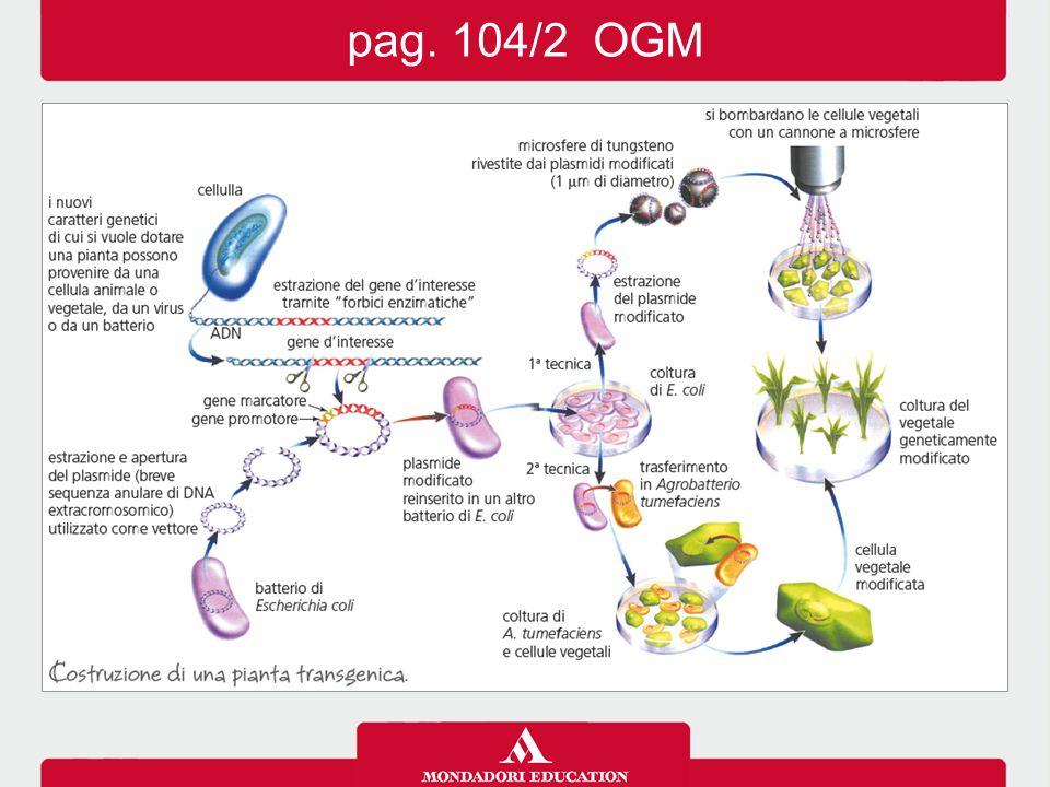 pag. 104/2 OGM
