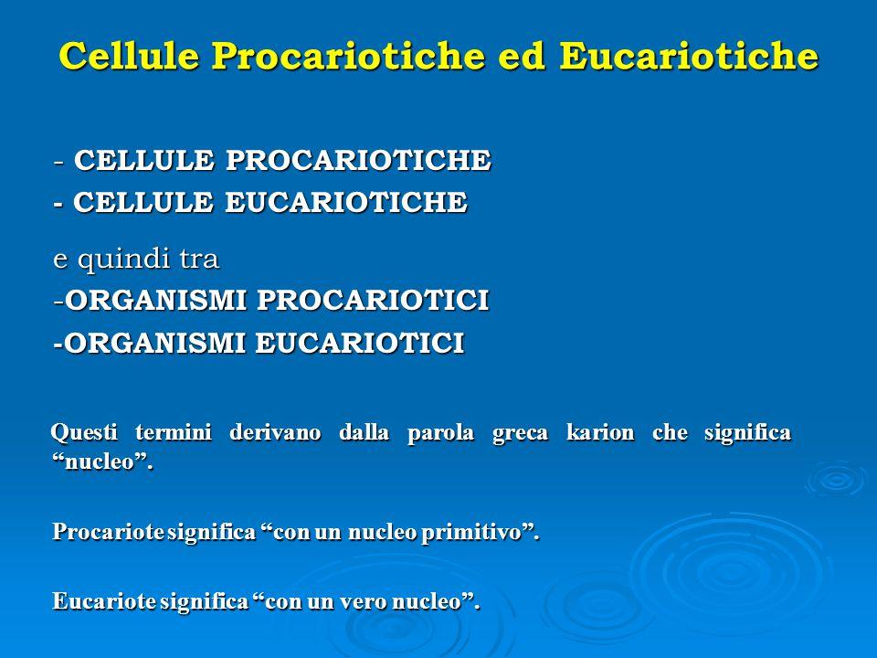 Cellule Procariotiche ed Eucariotiche - CELLULE PROCARIOTICHE - CELLULE EUCARIOTICHE e quindi tra - ORGANISMI PROCARIOTICI -ORGANISMI EUCARIOTICI Ques