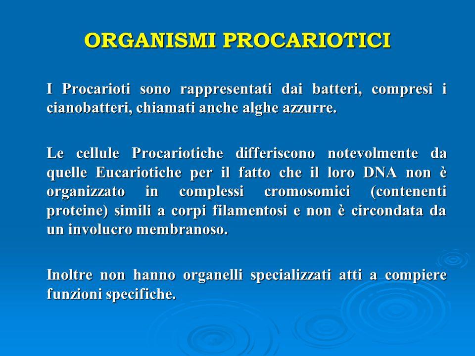 ORGANISMI PROCARIOTICI I Procarioti sono rappresentati dai batteri, compresi i cianobatteri, chiamati anche alghe azzurre. I Procarioti sono rappresen