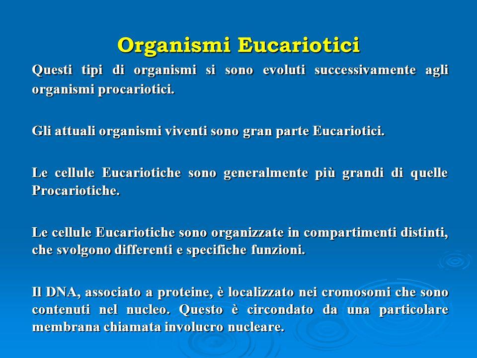 Organismi Eucariotici Questi tipi di organismi si sono evoluti successivamente agli organismi procariotici. Gli attuali organismi viventi sono gran pa