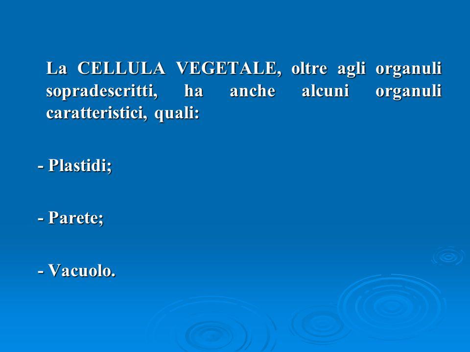 La CELLULA VEGETALE, oltre agli organuli sopradescritti, ha anche alcuni organuli caratteristici, quali: La CELLULA VEGETALE, oltre agli organuli sopr