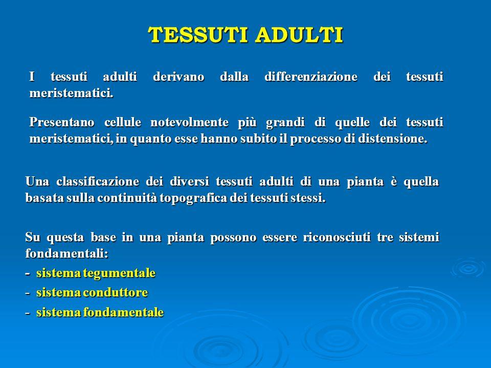 TESSUTI ADULTI I tessuti adulti derivano dalla differenziazione dei tessuti meristematici. I tessuti adulti derivano dalla differenziazione dei tessut