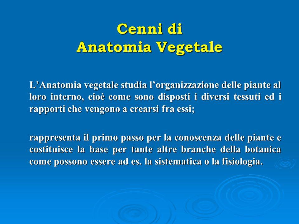 Cenni di Anatomia Vegetale L'Anatomia vegetale studia l'organizzazione delle piante al loro interno, cioè come sono disposti i diversi tessuti ed i ra