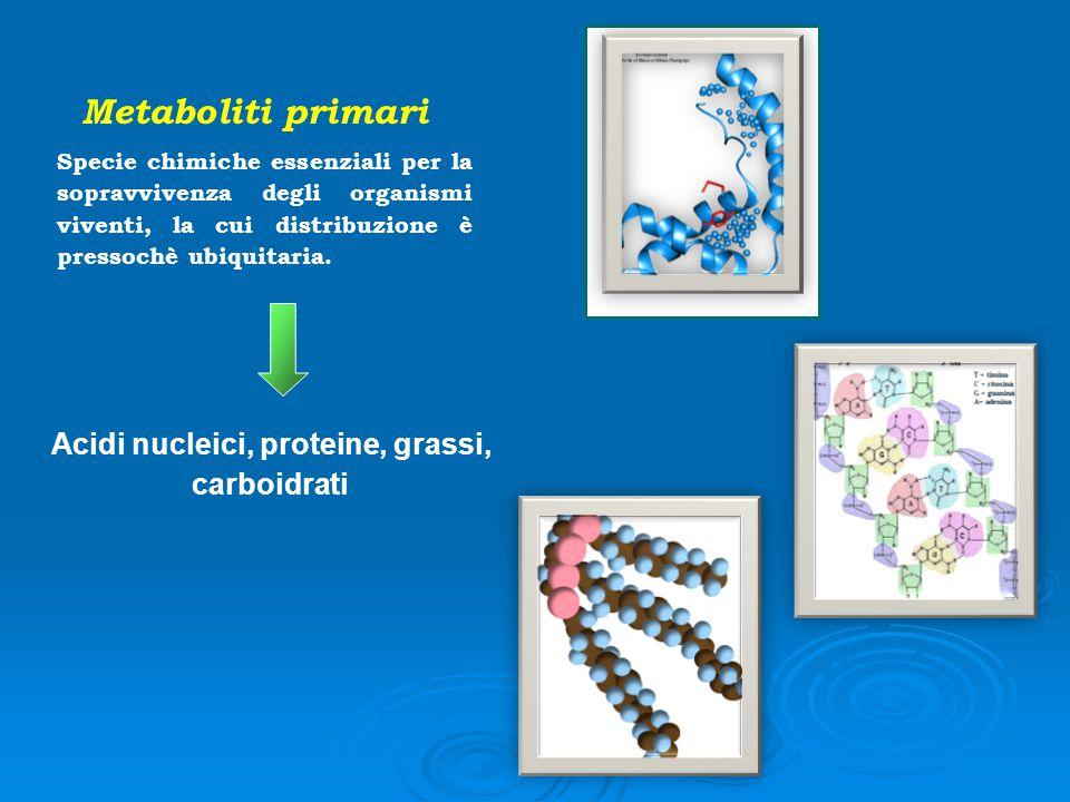 Metaboliti primari Specie chimiche essenziali per la sopravvivenza degli organismi viventi, la cui distribuzione è pressochè ubiquitaria. Acidi nuclei