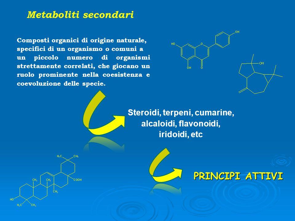 Metaboliti secondari Composti organici di origine naturale, specifici di un organismo o comuni a un piccolo numero di organismi strettamente correlati
