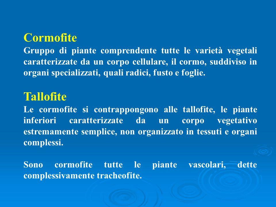 Cormofite Gruppo di piante comprendente tutte le varietà vegetali caratterizzate da un corpo cellulare, il cormo, suddiviso in organi specializzati, q