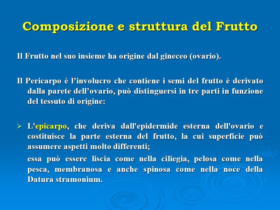 Composizione e struttura del Frutto Il Frutto nel suo insieme ha origine dal gineceo (ovario). Il Pericarpo è l'involucro che contiene i semi del frut