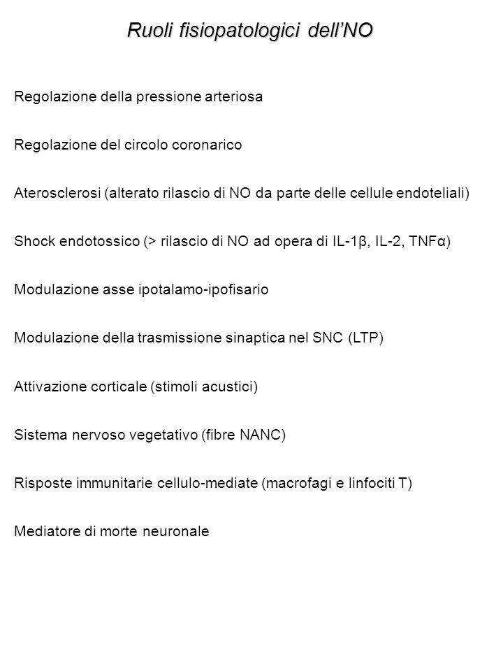 Ruoli fisiopatologici dell'NO Regolazione della pressione arteriosa Regolazione del circolo coronarico Aterosclerosi (alterato rilascio di NO da parte delle cellule endoteliali) Shock endotossico (> rilascio di NO ad opera di IL-1β, IL-2, TNFα) Modulazione asse ipotalamo-ipofisario Modulazione della trasmissione sinaptica nel SNC (LTP) Attivazione corticale (stimoli acustici) Sistema nervoso vegetativo (fibre NANC) Risposte immunitarie cellulo-mediate (macrofagi e linfociti T) Mediatore di morte neuronale