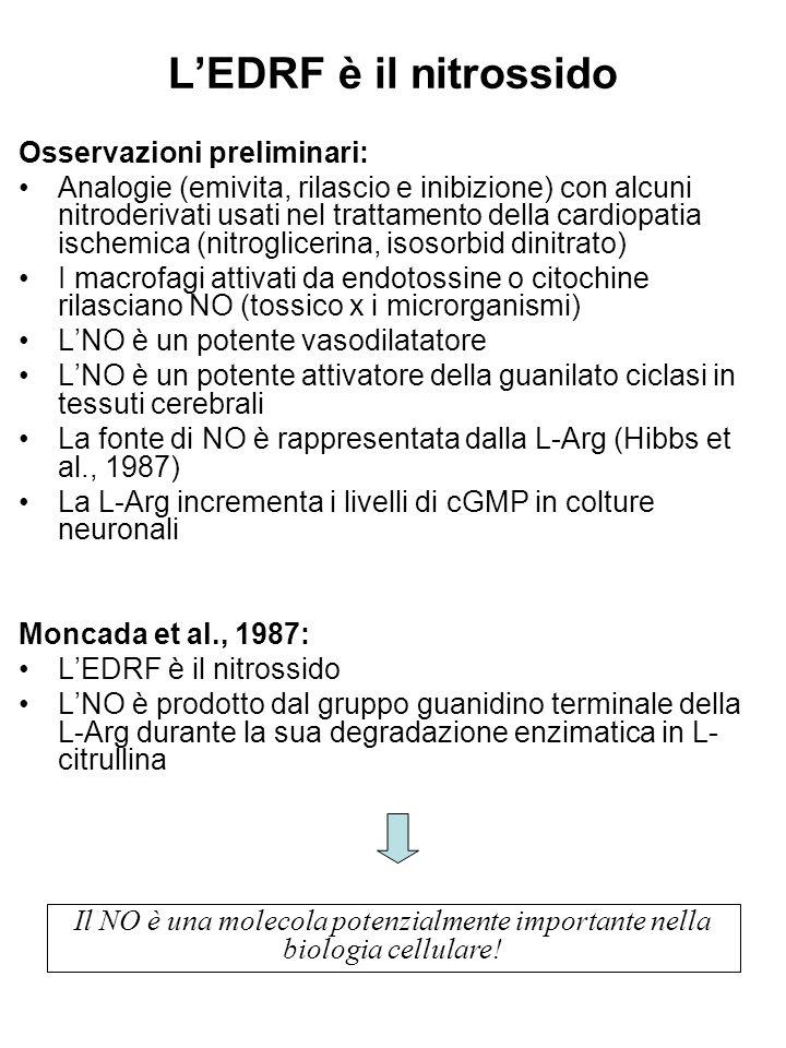 L'EDRF è il nitrossido Osservazioni preliminari: Analogie (emivita, rilascio e inibizione) con alcuni nitroderivati usati nel trattamento della cardiopatia ischemica (nitroglicerina, isosorbid dinitrato) I macrofagi attivati da endotossine o citochine rilasciano NO (tossico x i microrganismi) L'NO è un potente vasodilatatore L'NO è un potente attivatore della guanilato ciclasi in tessuti cerebrali La fonte di NO è rappresentata dalla L-Arg (Hibbs et al., 1987) La L-Arg incrementa i livelli di cGMP in colture neuronali Moncada et al., 1987: L'EDRF è il nitrossido L'NO è prodotto dal gruppo guanidino terminale della L-Arg durante la sua degradazione enzimatica in L- citrullina Il NO è una molecola potenzialmente importante nella biologia cellulare!