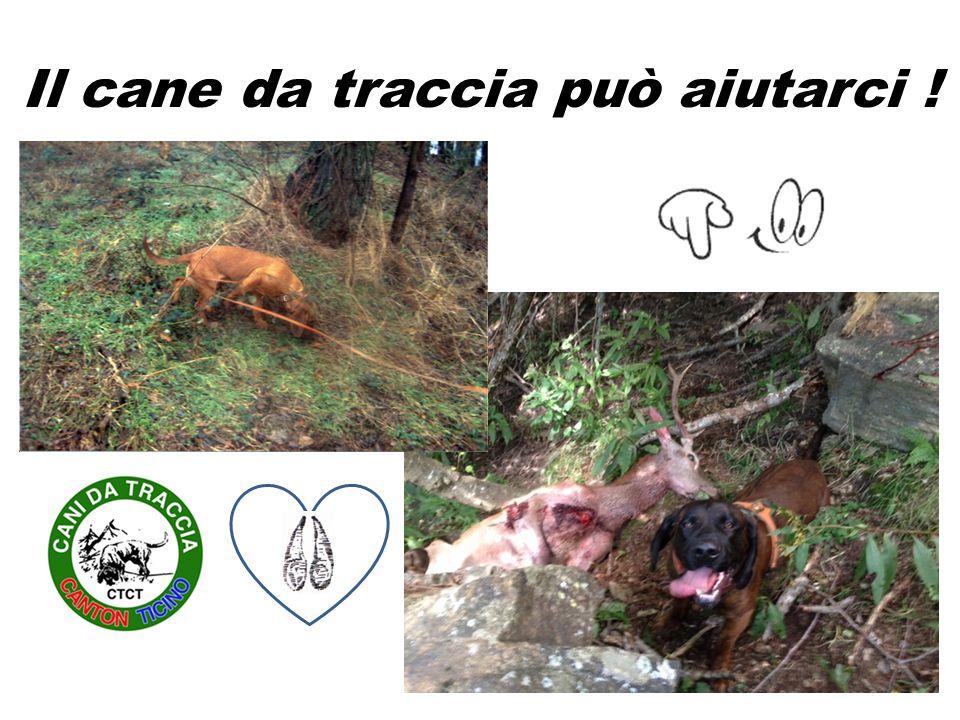 Il cane da traccia può aiutarci !