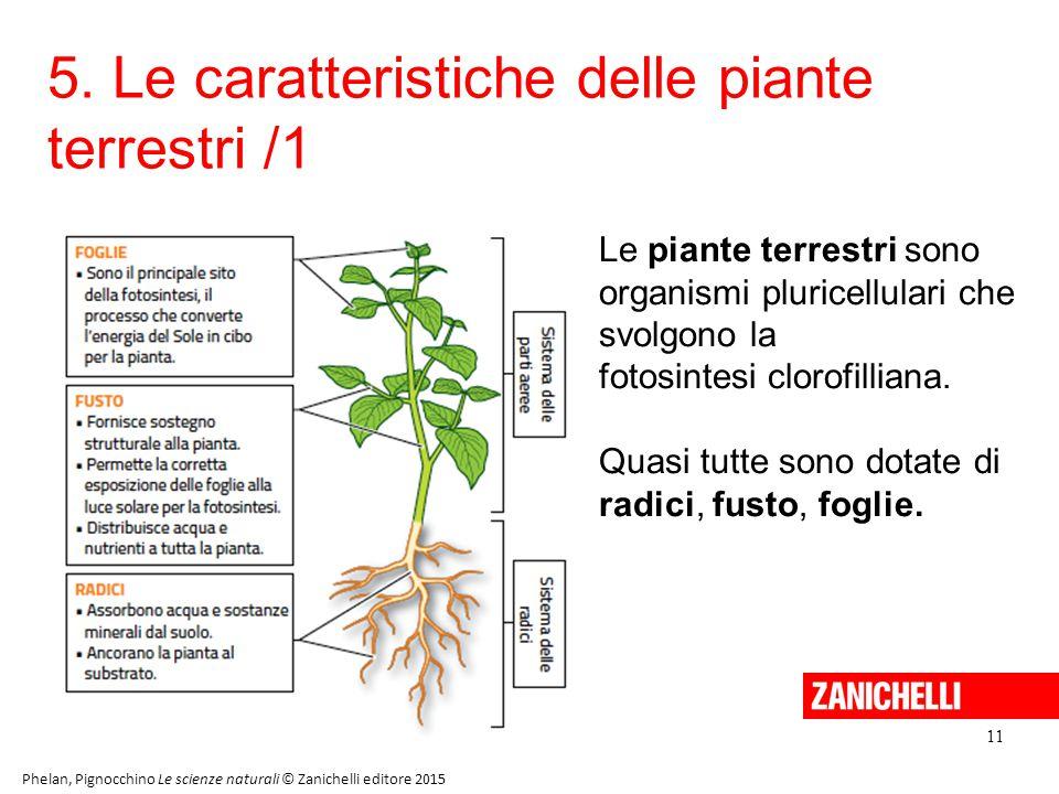 5. Le caratteristiche delle piante terrestri /1 11 Phelan, Pignocchino Le scienze naturali © Zanichelli editore 2015 Le piante terrestri sono organism