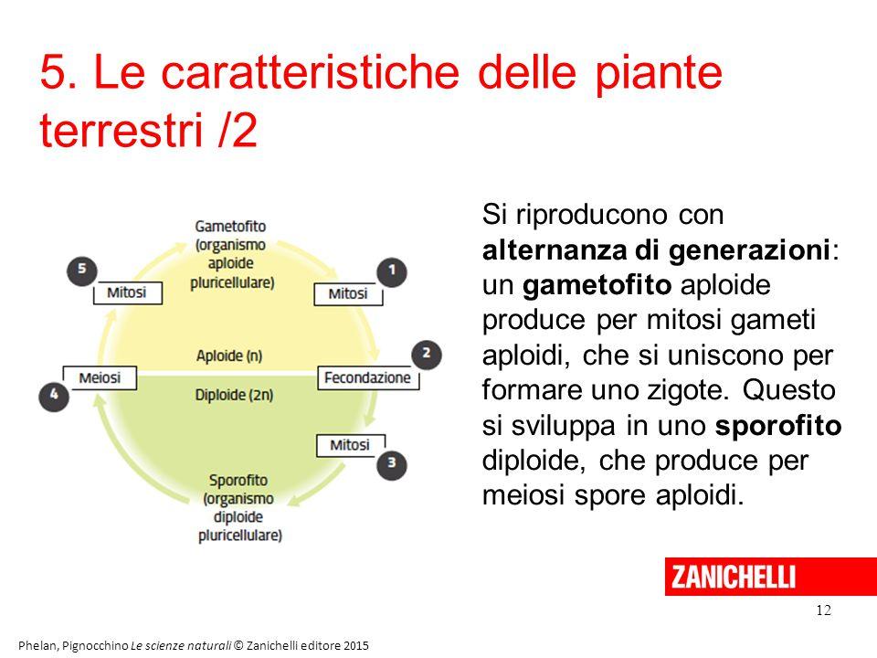 5. Le caratteristiche delle piante terrestri /2 12 Phelan, Pignocchino Le scienze naturali © Zanichelli editore 2015 Si riproducono con alternanza di