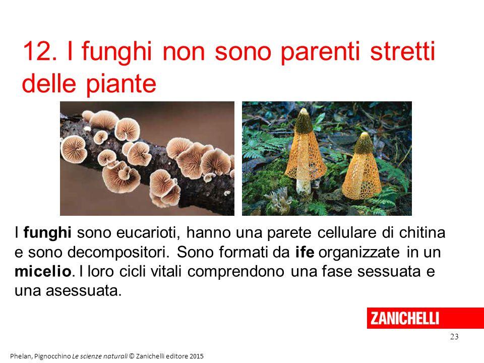 12. I funghi non sono parenti stretti delle piante 23 Phelan, Pignocchino Le scienze naturali © Zanichelli editore 2015 I funghi sono eucarioti, hanno