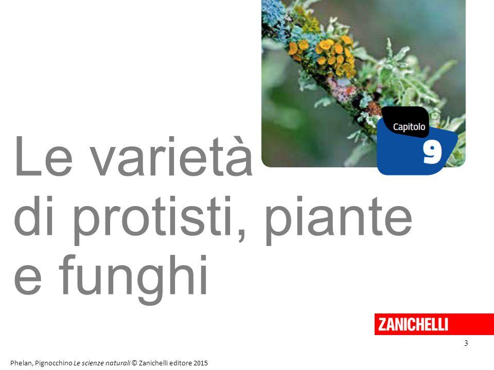 Le varietà di protisti, piante e funghi 3 Phelan, Pignocchino Le scienze naturali © Zanichelli editore 2015