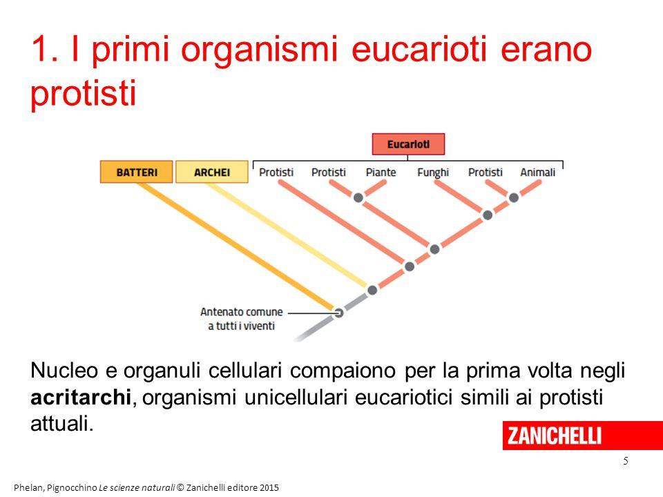 1. I primi organismi eucarioti erano protisti 5 Phelan, Pignocchino Le scienze naturali © Zanichelli editore 2015 Nucleo e organuli cellulari compaion
