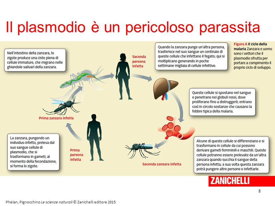 Il plasmodio è un pericoloso parassita 8 Phelan, Pignocchino Le scienze naturali © Zanichelli editore 2015