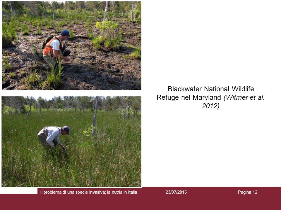 23/07/2015 Pagina 12 Blackwater National Wildlife Refuge nel Maryland (Witmer et al. 2012) Il problema di una specie invasiva; la nutria in Italia