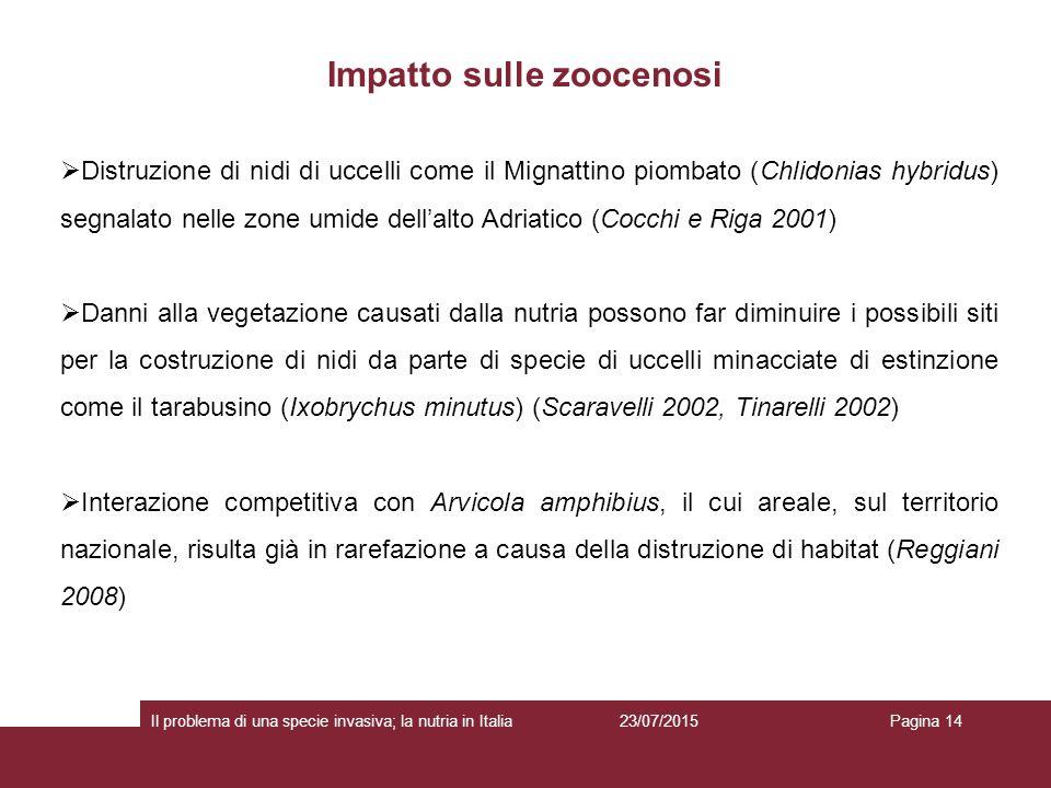 Impatto sulle zoocenosi 23/07/2015 Il problema di una specie invasiva; la nutria in ItaliaPagina 14  Distruzione di nidi di uccelli come il Mignattin