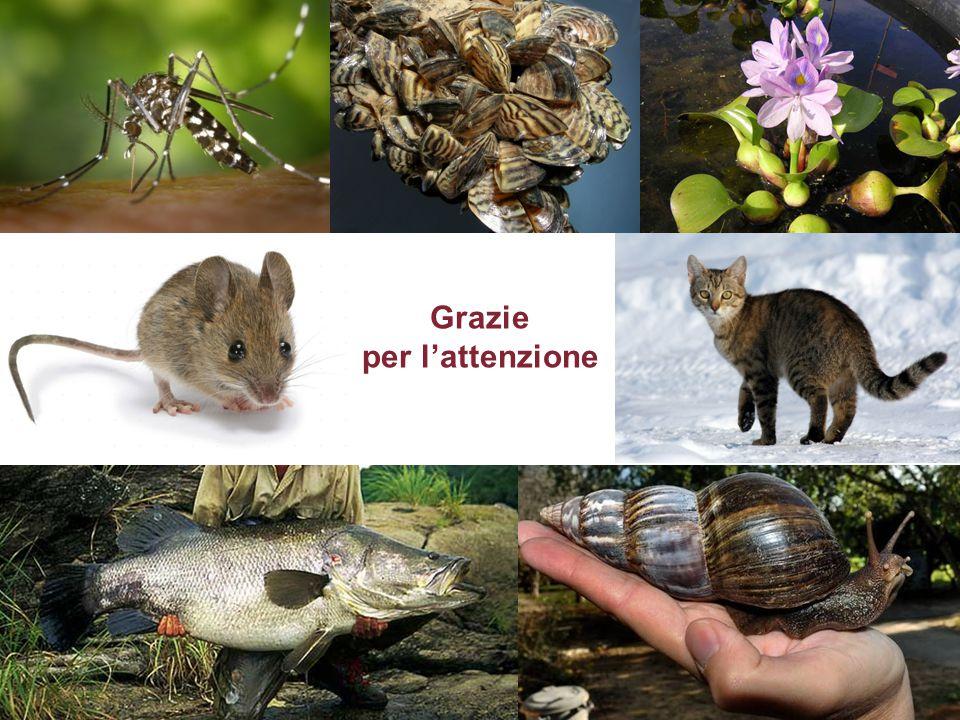 Grazie per l'attenzione Il problema di una specie invasiva; la nutria in Italia