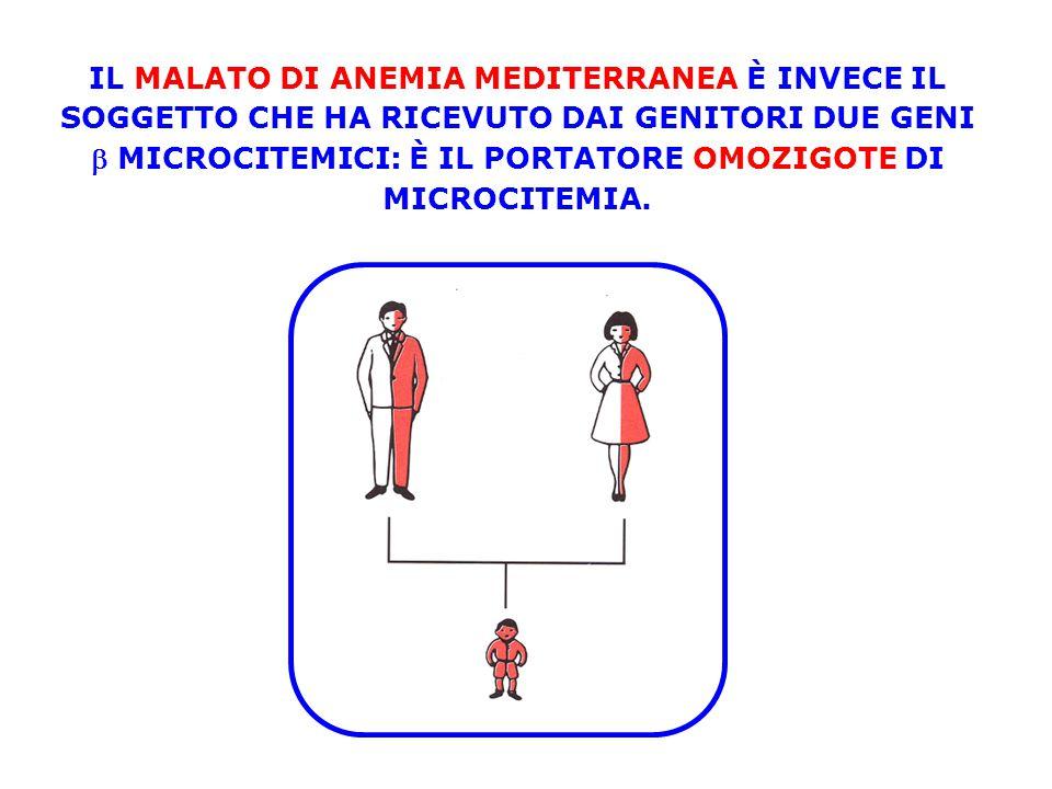 IL MALATO DI ANEMIA MEDITERRANEA È INVECE IL SOGGETTO CHE HA RICEVUTO DAI GENITORI DUE GENI  MICROCITEMICI: È IL PORTATORE OMOZIGOTE DI MICROCITEMIA.