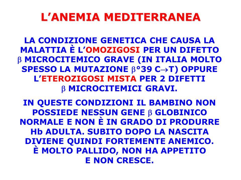 L'ANEMIA MEDITERRANEA LA CONDIZIONE GENETICA CHE CAUSA LA MALATTIA È L'OMOZIGOSI PER UN DIFETTO  MICROCITEMICO GRAVE (IN ITALIA MOLTO SPESSO LA MUTAZ
