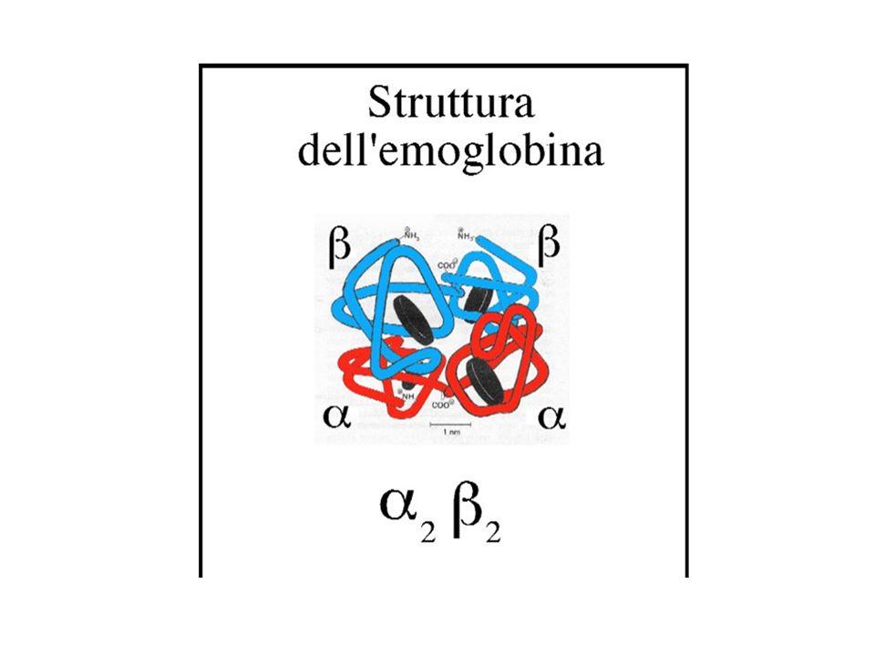 IN ITALIA VIVONO CIRCA 2.500.000 MICROCITEMICI SANI.