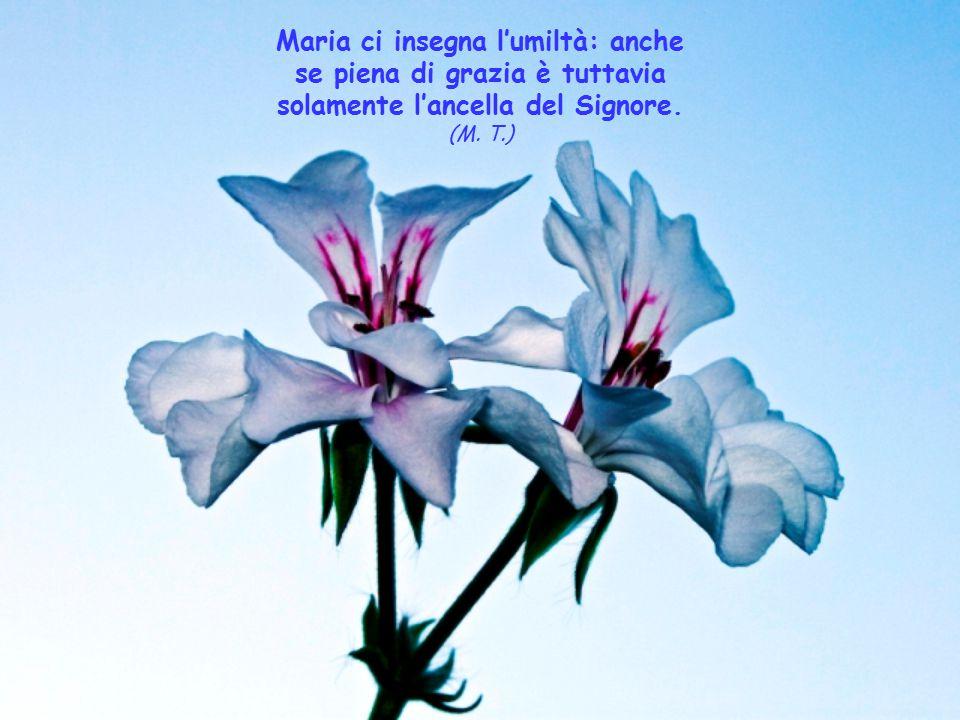 Maria che non è sacerdote, ma è Madre del sommo, ed eterno ed unico Sacerdote, in cui solo hanno senso tutti i sacerdoti, rimanga per loro il modello,