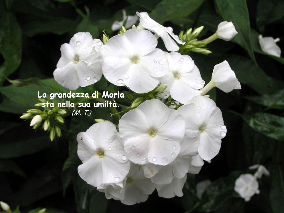 Maria ci insegna l'umiltà: anche se piena di grazia è tuttavia solamente l'ancella del Signore.