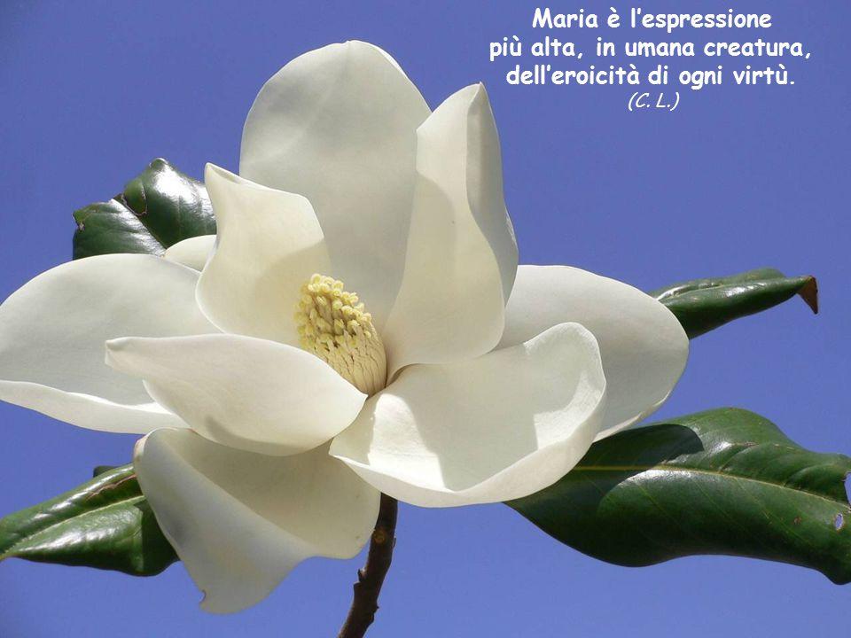 Maria è l'espressione più alta, in umana creatura, dell'eroicità di ogni virtù. (C. L.)