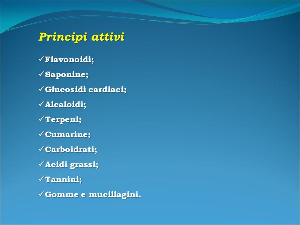 Principi attivi Flavonoidi; Flavonoidi; Saponine; Saponine; Glucosidi cardiaci; Glucosidi cardiaci; Alcaloidi; Alcaloidi; Terpeni; Terpeni; Cumarine; Cumarine; Carboidrati; Carboidrati; Acidi grassi; Acidi grassi; Tannini; Tannini; Gomme e mucillagini.