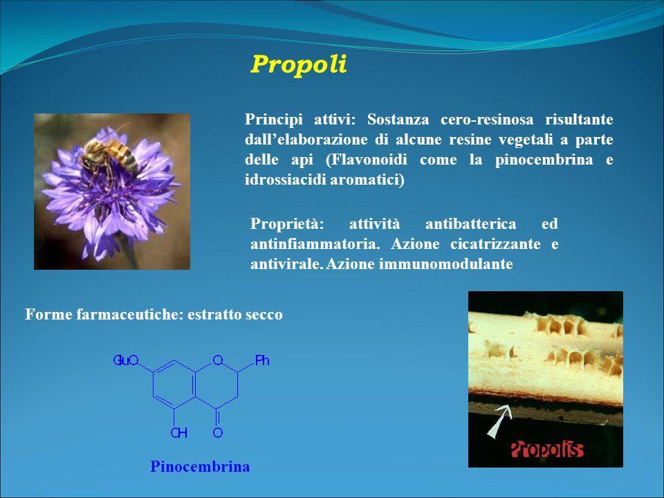 Propoli Principi attivi: Sostanza cero-resinosa risultante dall'elaborazione di alcune resine vegetali a parte delle api (Flavonoidi come la pinocembrina e idrossiacidi aromatici) Proprietà: attività antibatterica ed antinfiammatoria.