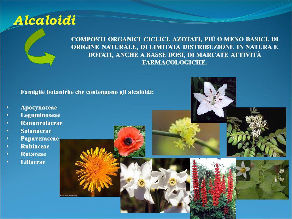Famiglie botaniche che contengono gli alcaloidi: Apocynaceae Leguminoseae Ranuncolaceae Solanaceae Papaveraceae Rubiaceae Rutaceae Liliaceae COMPOSTI ORGANICI CICLICI, AZOTATI, PIÙ O MENO BASICI, DI ORIGINE NATURALE, DI LIMITATA DISTRIBUZIONE IN NATURA E DOTATI, ANCHE A BASSE DOSI, DI MARCATE ATTIVITÀ FARMACOLOGICHE.