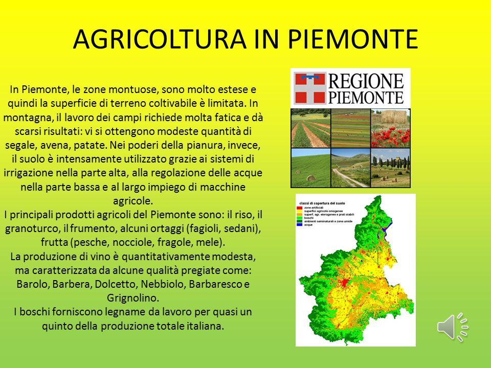 AGRICOLTURA IN PIEMONTE In Piemonte, le zone montuose, sono molto estese e quindi la superficie di terreno coltivabile è limitata.
