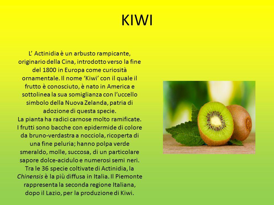 L' Actinidia è un arbusto rampicante, originario della Cina, introdotto verso la fine del 1800 in Europa come curiosità ornamentale.