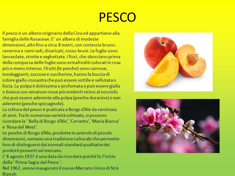 PESCO Il pesco è un albero originario della Cina ed appartiene alla famiglia delle Rosaceae.